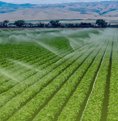 IRRIGATION AGRICOLE