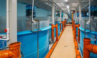 recirculated system aquaculture